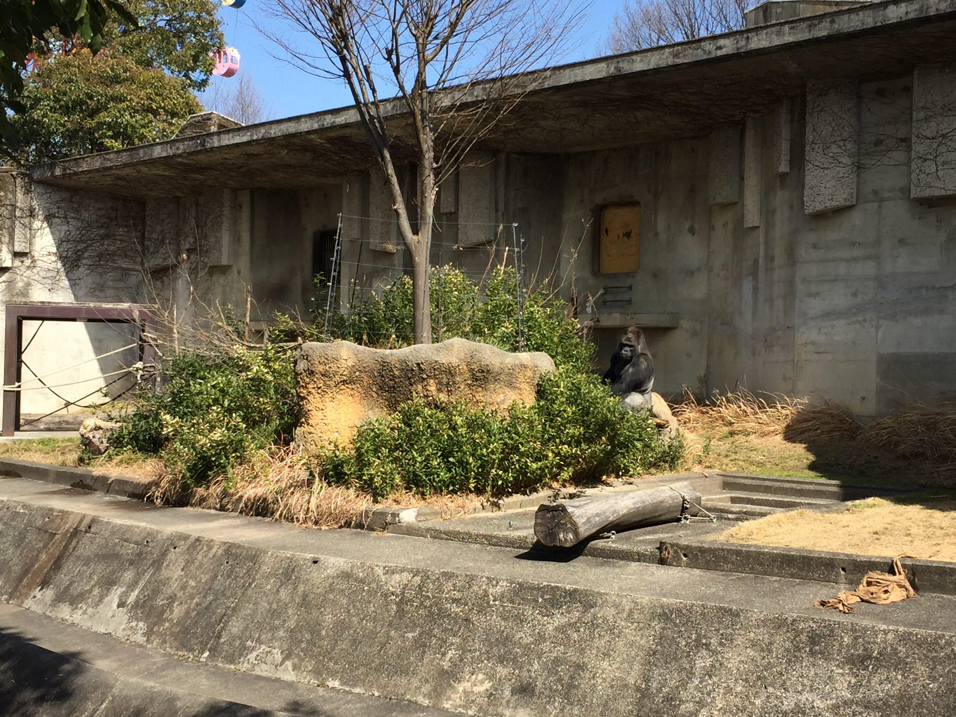 higashiyama-zoo-shabani