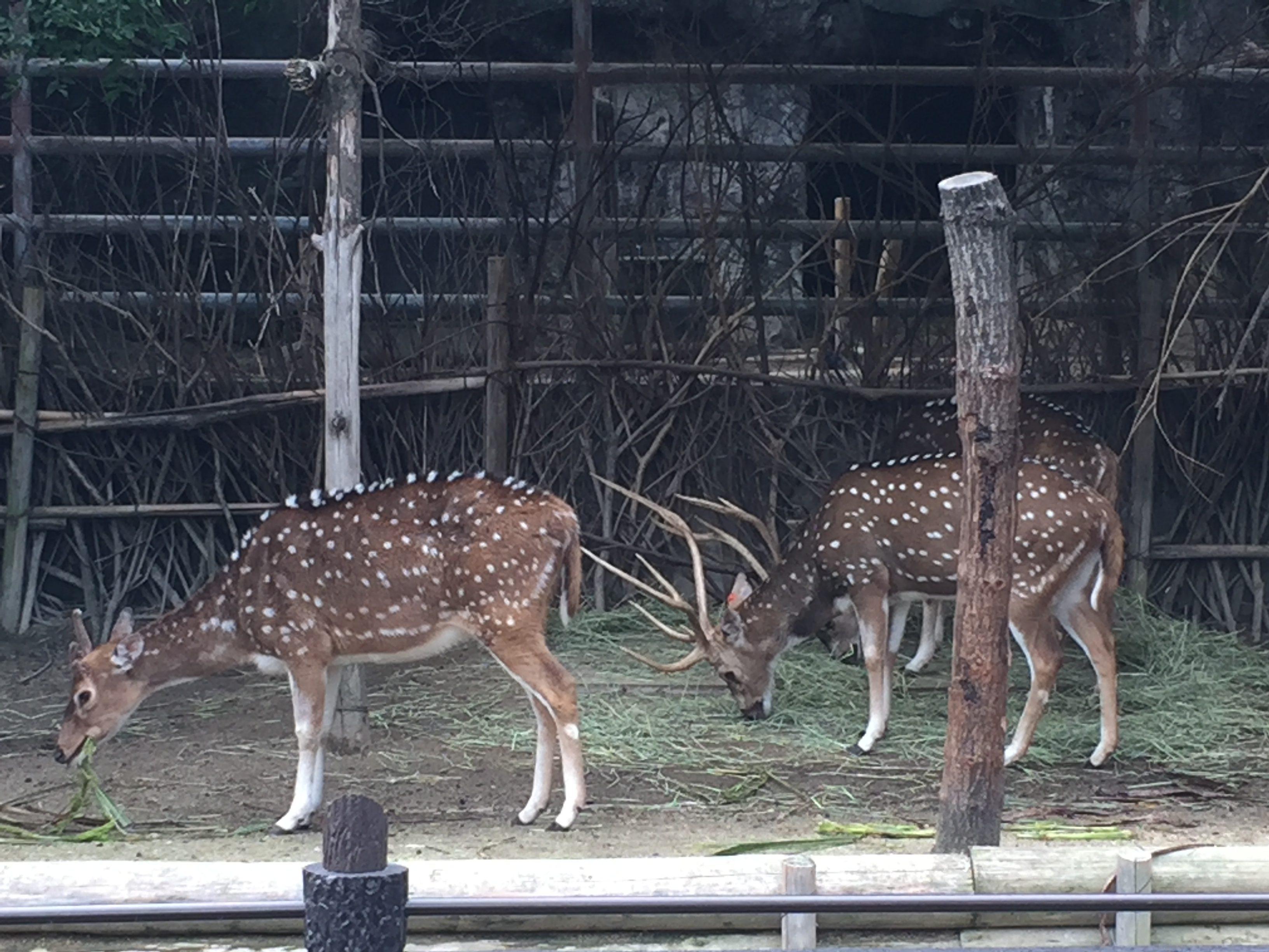 higashiyama-zoo-park-ranking