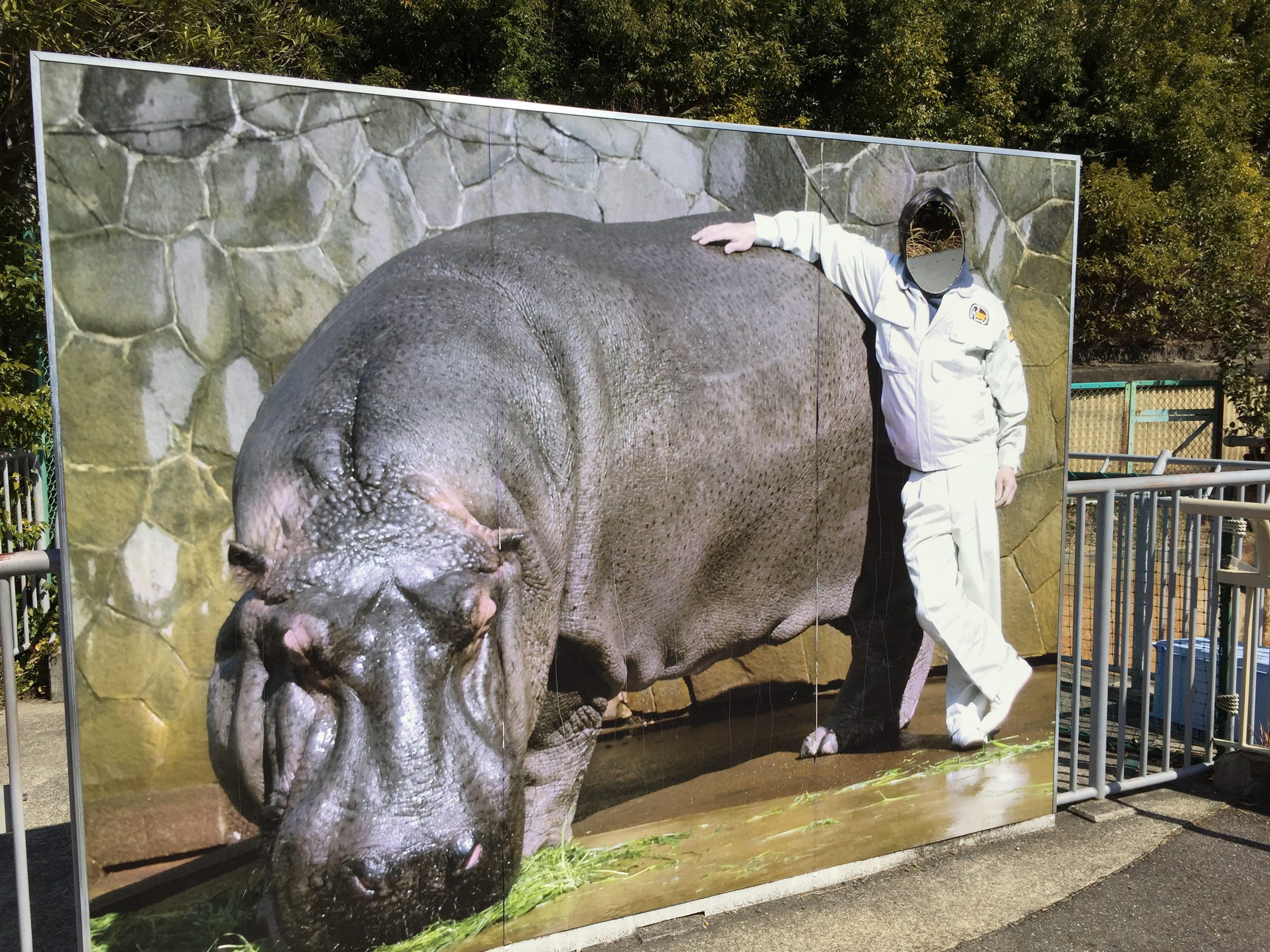 higashiyama-zoo-hippopotamus