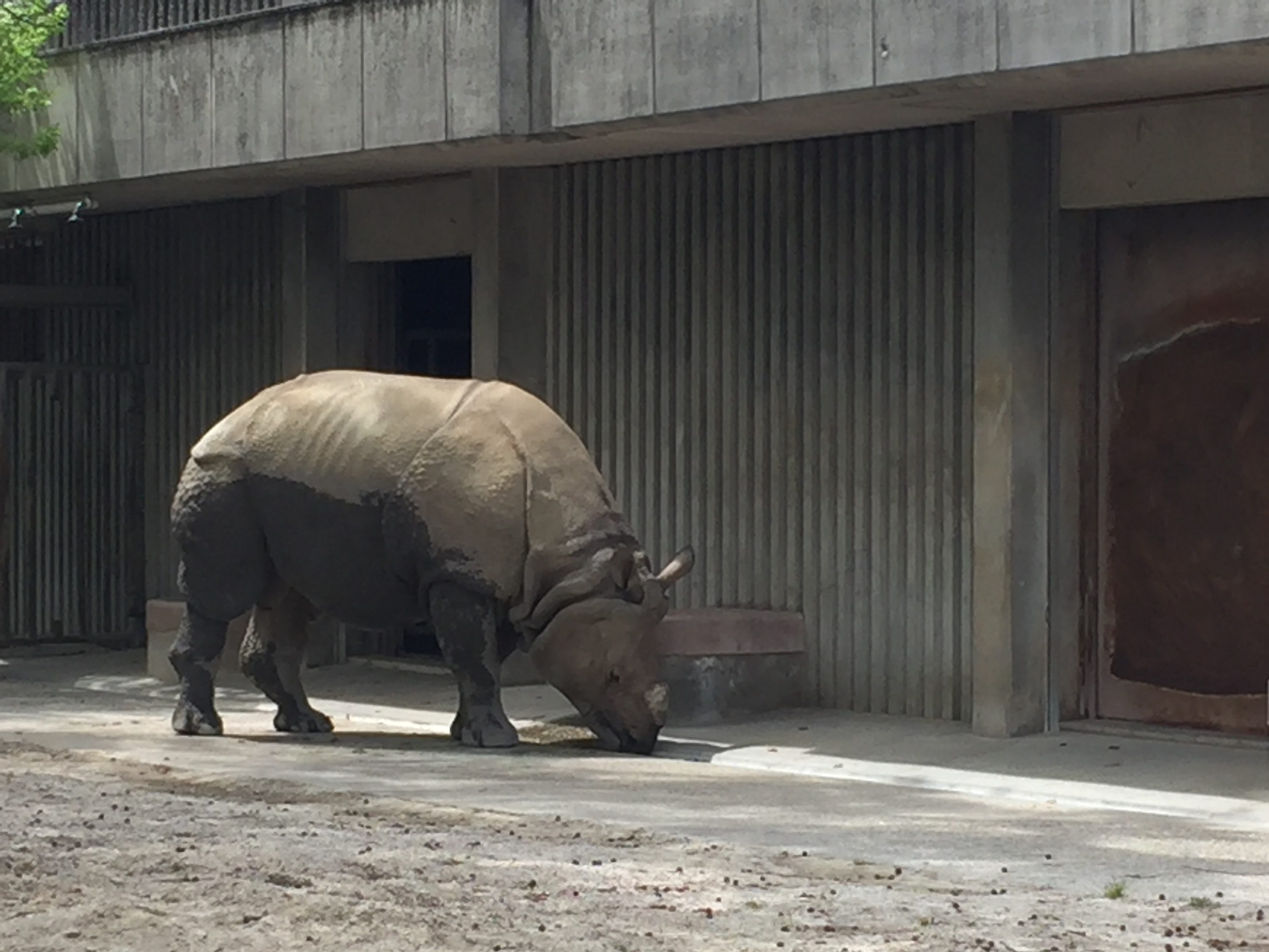 higashiyama-zoo-rhinoceros