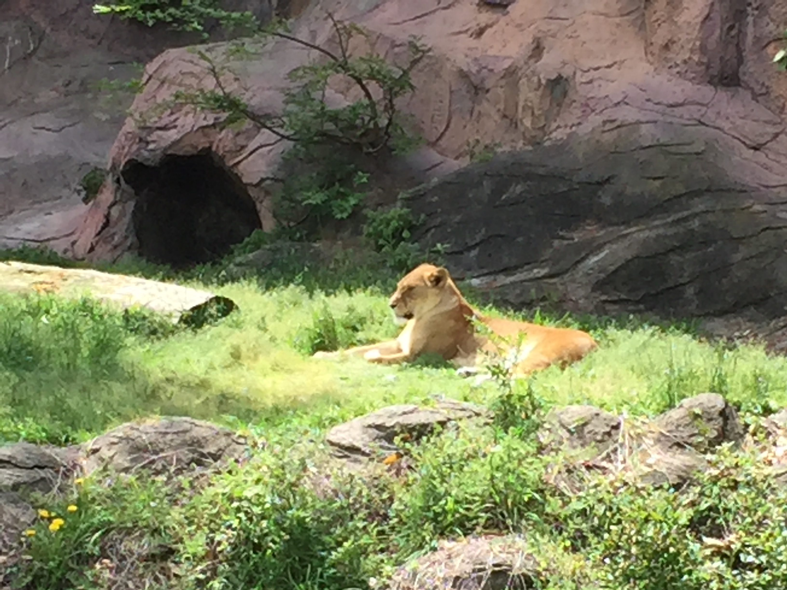 higashiyama-zoo-rion