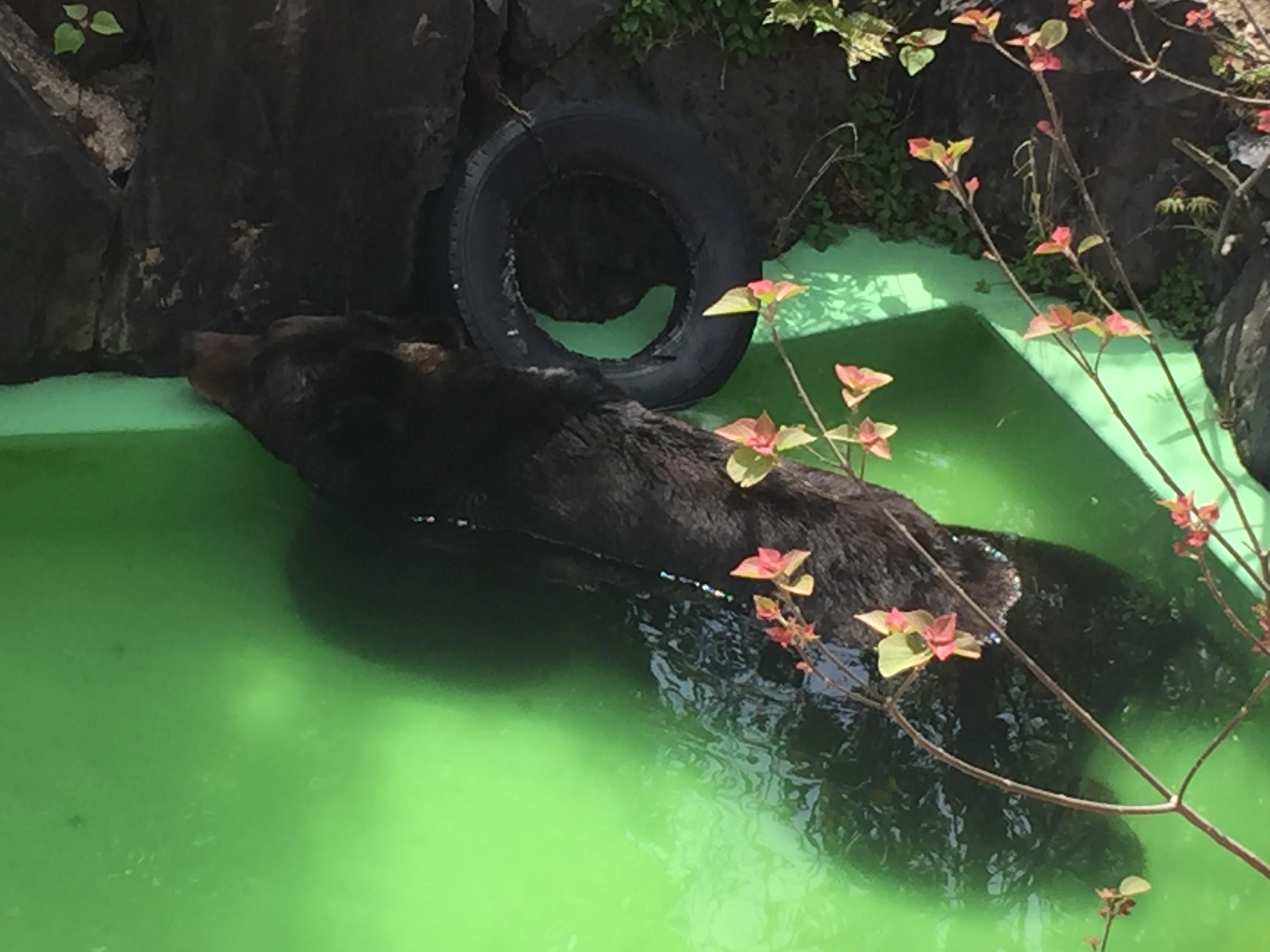 higashiyama-zoo-bear