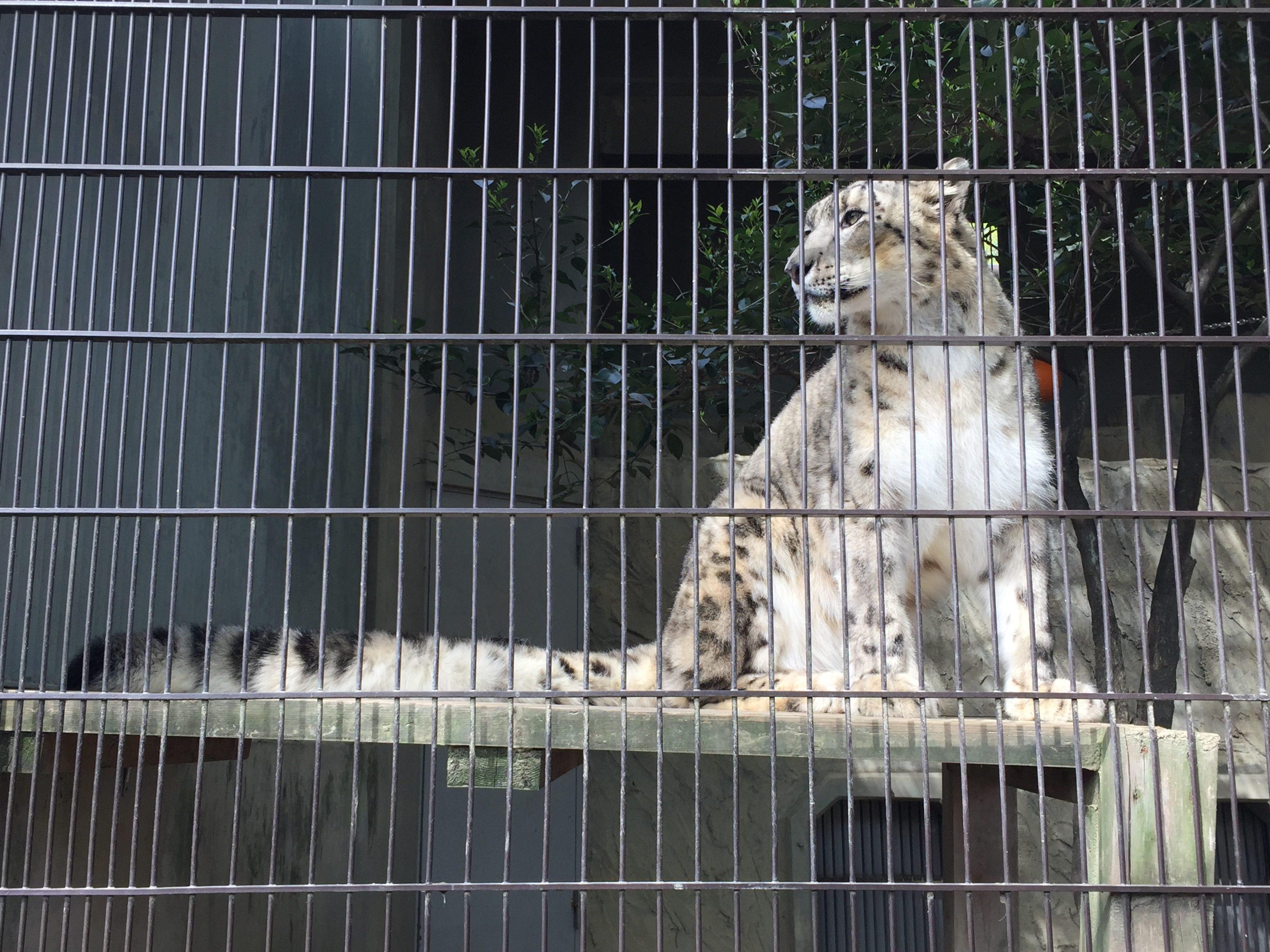 higashiyama-zoo-pantherauncia