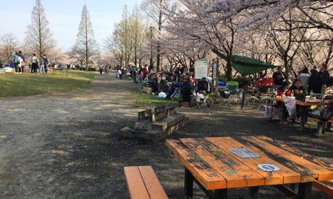 arakogawa-park-sakura
