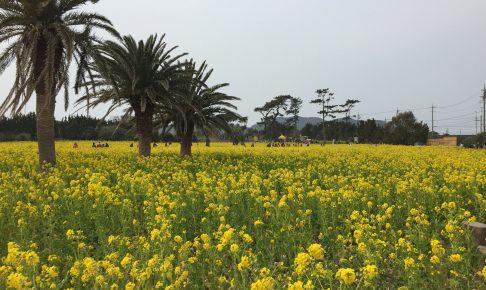 irako-nanohana-garden
