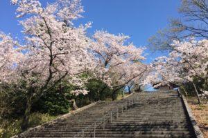 heiwa-park-sakura