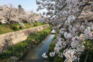 nagoya-sakura-select