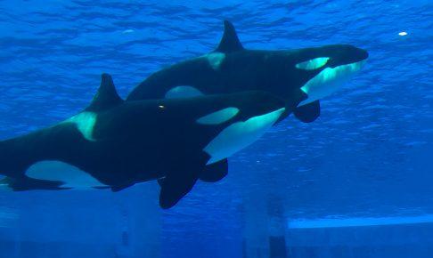 nagoyakou-aquarium-popular