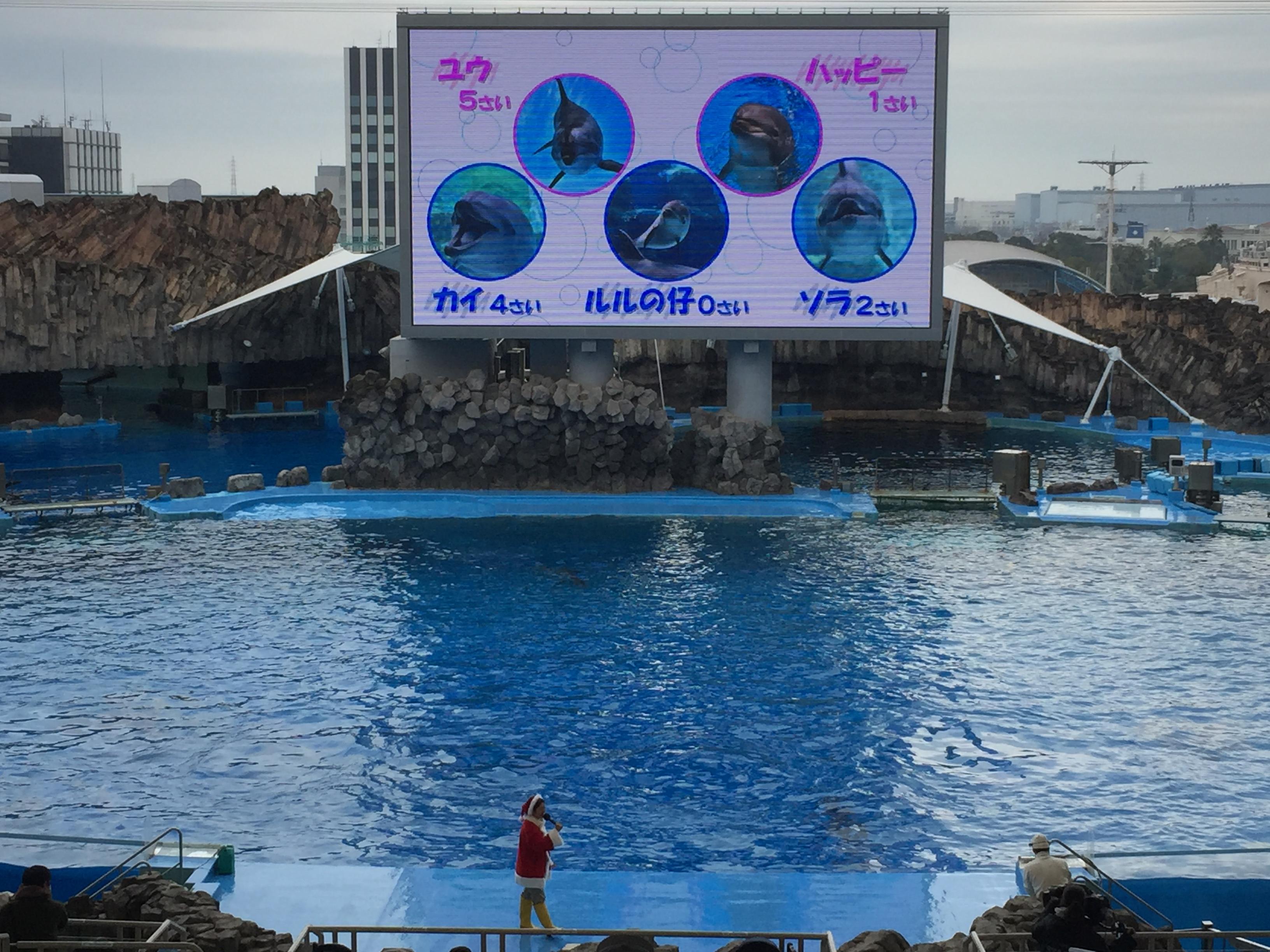 nagoyakou-aquarium-christmas