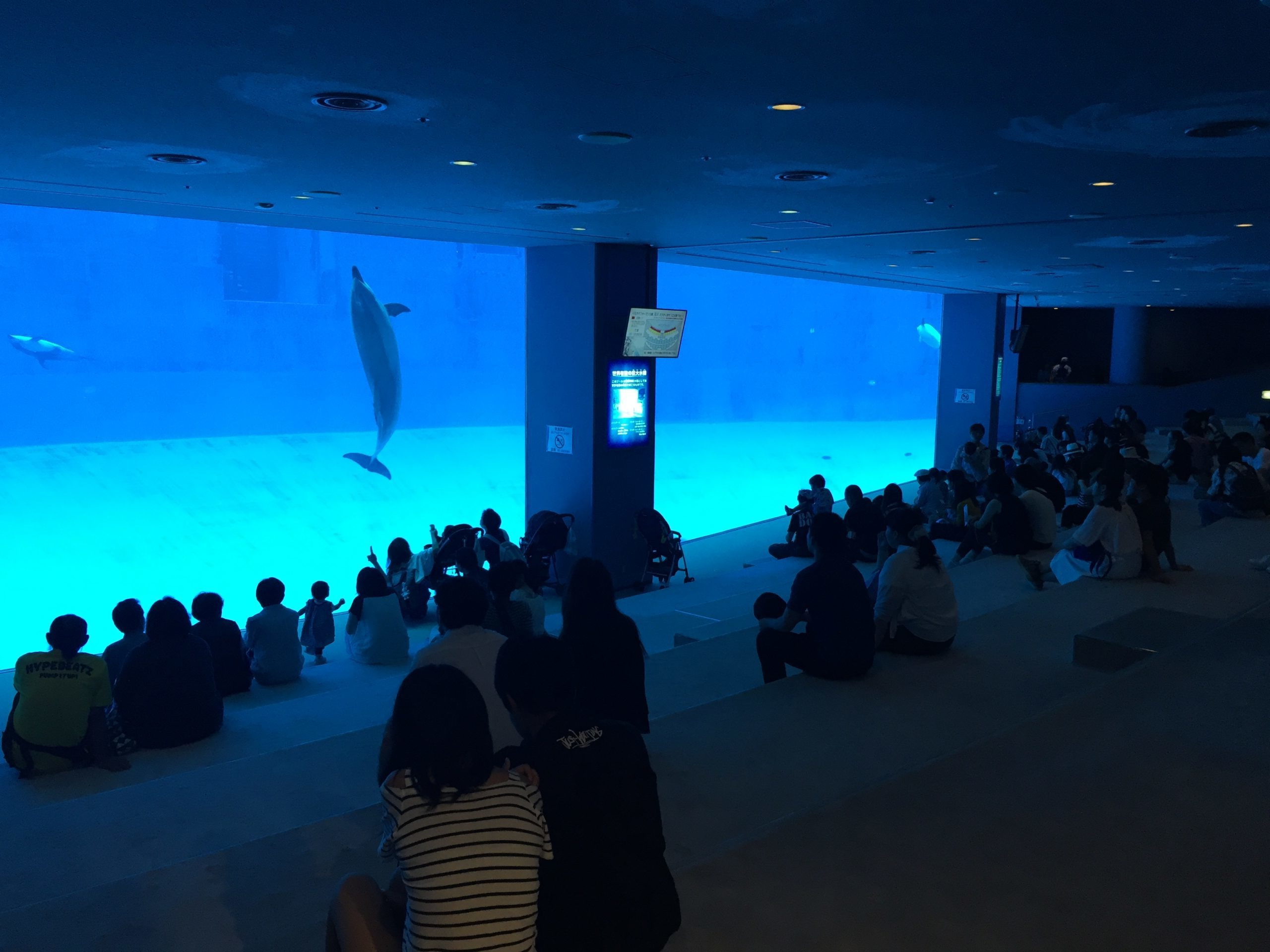 nagoyakou-aquarium-popular