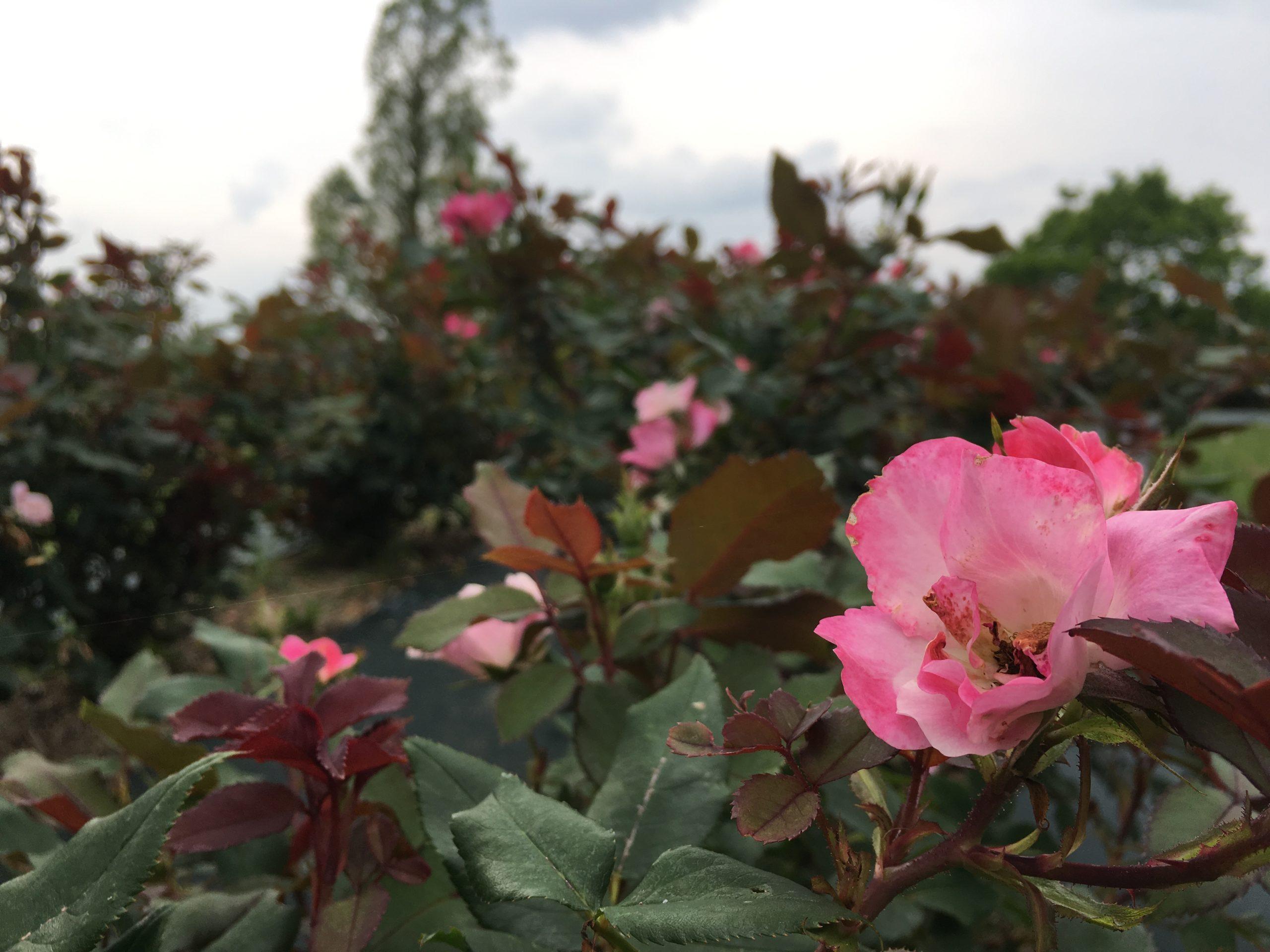 aichi-spring-spot